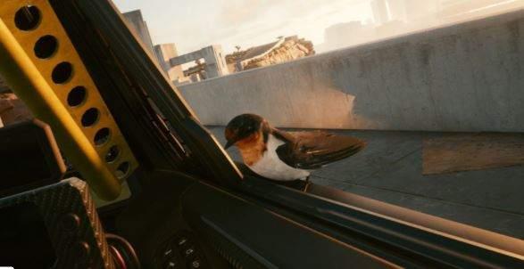 《2077》玩家找到希里有关线索 鸟类灭绝后竟出现活家燕